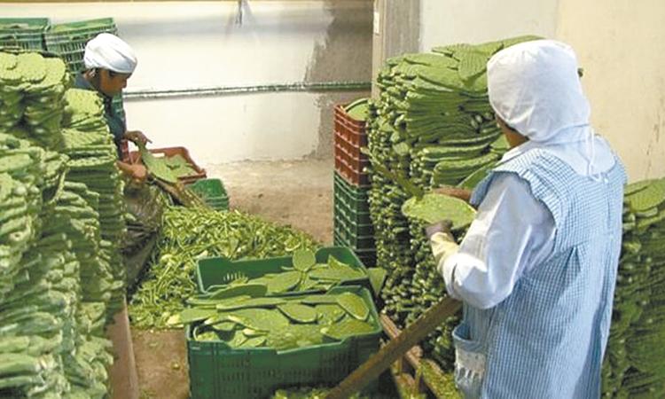 Fomentan protección  a los cultivos de nopal
