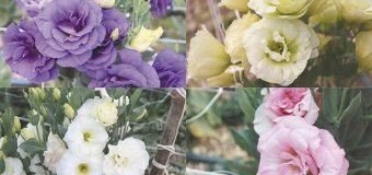 Promueven la producción de flores de ornato en Morelos