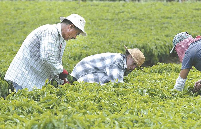 Pierden 400 mil empleos en sector agrícola de Sonora por heladas
