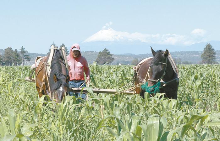 Agro mexicano busca explorar nuevos mercados externos
