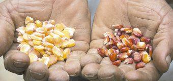 Posible transformar el sistema  alimentario de México; FAO