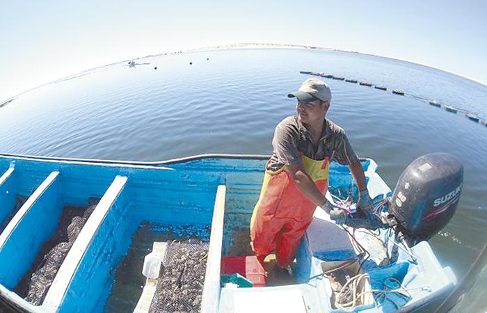 Fomentan actividad pesquera Cucapá
