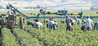 Jornaleros agrícolas de Sonora logran siete por ciento de aumento salarial