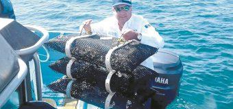 Desarrollo pesquero y  acuícola al sur del Estado