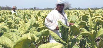 Cumple 45 años Programa de Trabajadores Agrícolas Temporales en Canadá
