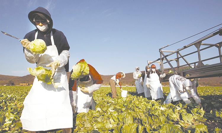 Sector agro crece más que economía nacional en cuarto trimestre