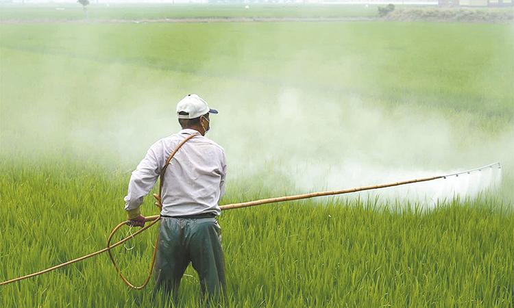 Propone Sader modernizar  la regulación de plaguicidas
