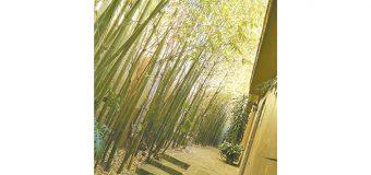 Flexible como el bambú