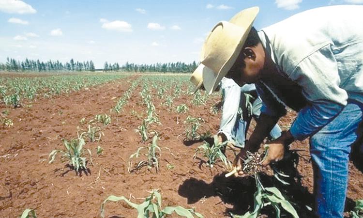 Campo agrícola, condenado a  políticas excluyentes por tres décadas