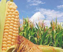 Arranca centro de innovación para vincular al sector agroalimentario