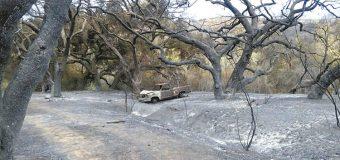 9 de cada 10 incendios forestales  son causados por los humanos