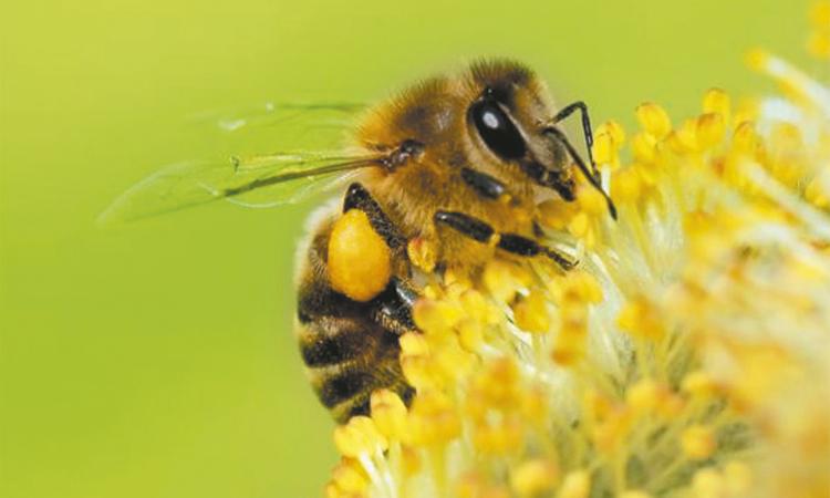 Cambio climático, amenaza  grave para las abejas: FAO