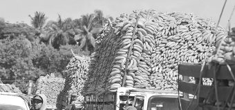 Iniciarían en un mes exportaciones de banano a China, estima Sader
