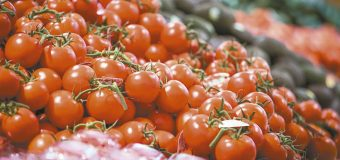 Productores de tomate buscan  amparo contra arancel en EU