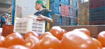 Continúa la exportación de tomates por Nogales hacia EU