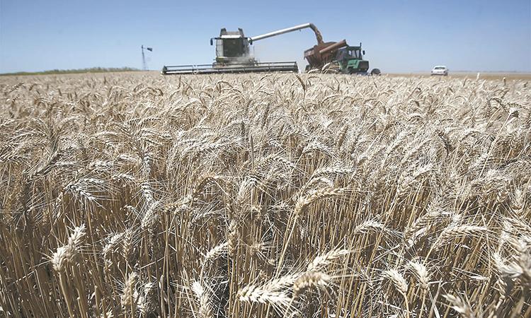Incertidumbre entre productores  de trigo por falta de apoyos