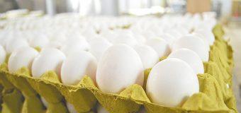 Clasificación de huevo;  mito en Baja California