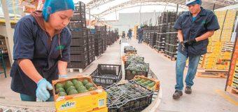 Va México por 38 nuevos mercados para exportar alimentos