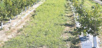 Tecnología digital favorece beneficios agrícolas y ambientales FAO