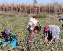 Tiene México más de 3.2  millones de niños trabajadores