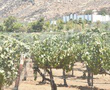 Avanza proyecto de  Reglamento para Valles Vitivinícolas; IMIP