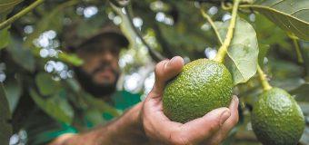 Estudio asegura; amenazan a  seguridad alimentaria mundial