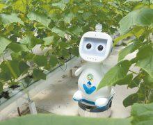 Investigadores chinos  desarrollan robot agrícola