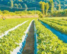 NASA: fincas verticales serán futuro para suplir alimentos en Latinoamérica