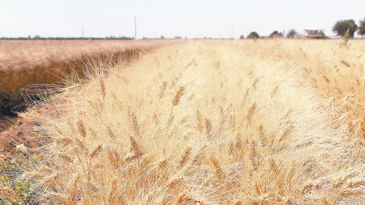 AMLO margina a  más del 90% de  productores de BC