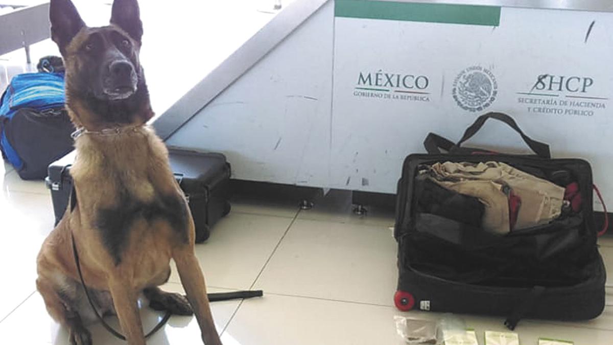 El SAT decomisa armas y  droga en Aduana de Tijuana