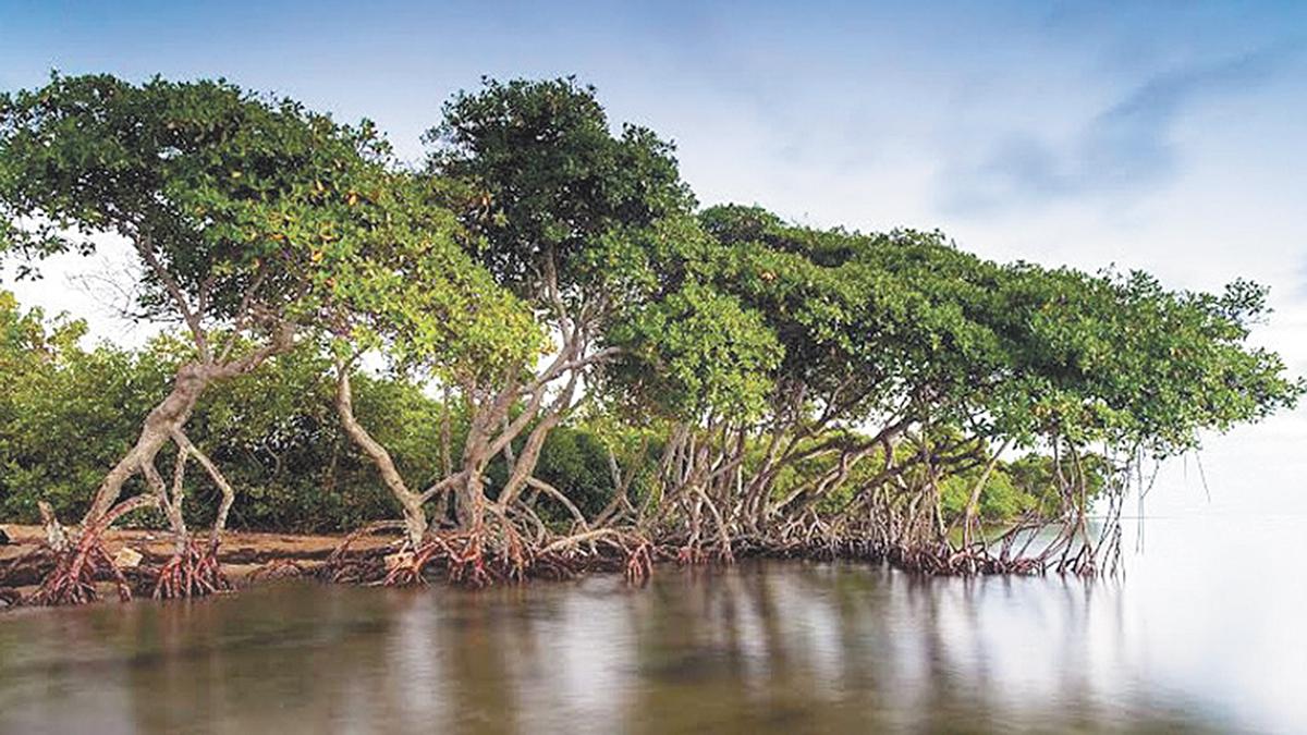 Planea La Paz Proyecto De Agricultura Con Agua De Mar Más Grande Del Mundo