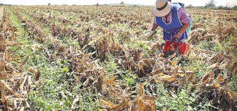 Prevén muerte del agro en 1 año
