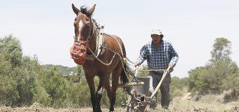 Agricultura con más presuntos desvíos en 2018