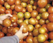 EU inspeccionará importaciones de tomates y chile de México