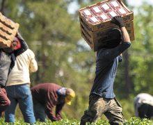 Inmigrantes levantan un sistema  alimentario que necesita reforma