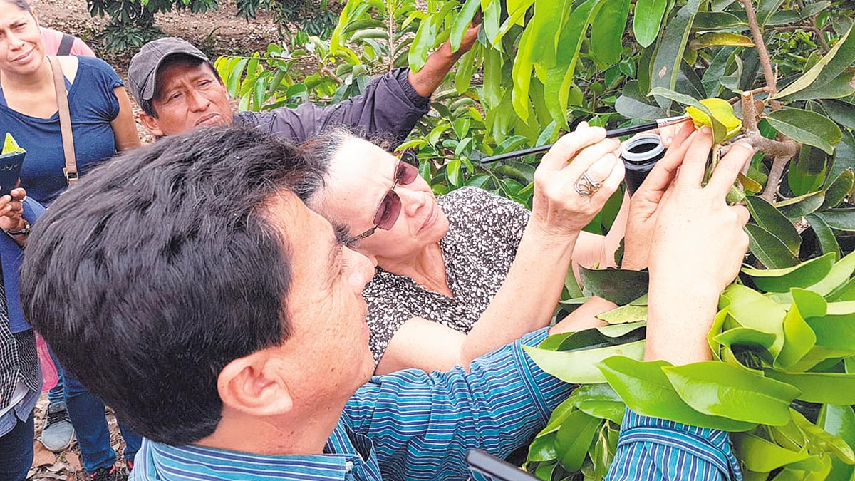 Polinización artificial mejora rendimiento de los cultivos en Israel