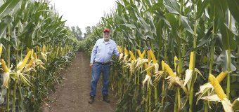 Impone mexicano marca en maíz