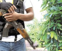 Aguacate, estrés hídrico, deforestación y captación del crimen