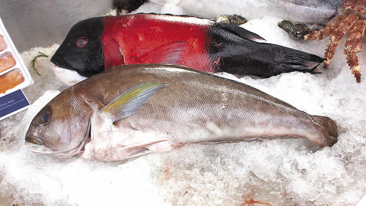Fomentan consumo de pescados y mariscos