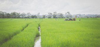 IICA y UE lanzan aplicación con recomendaciones para el agro ante COVID-19