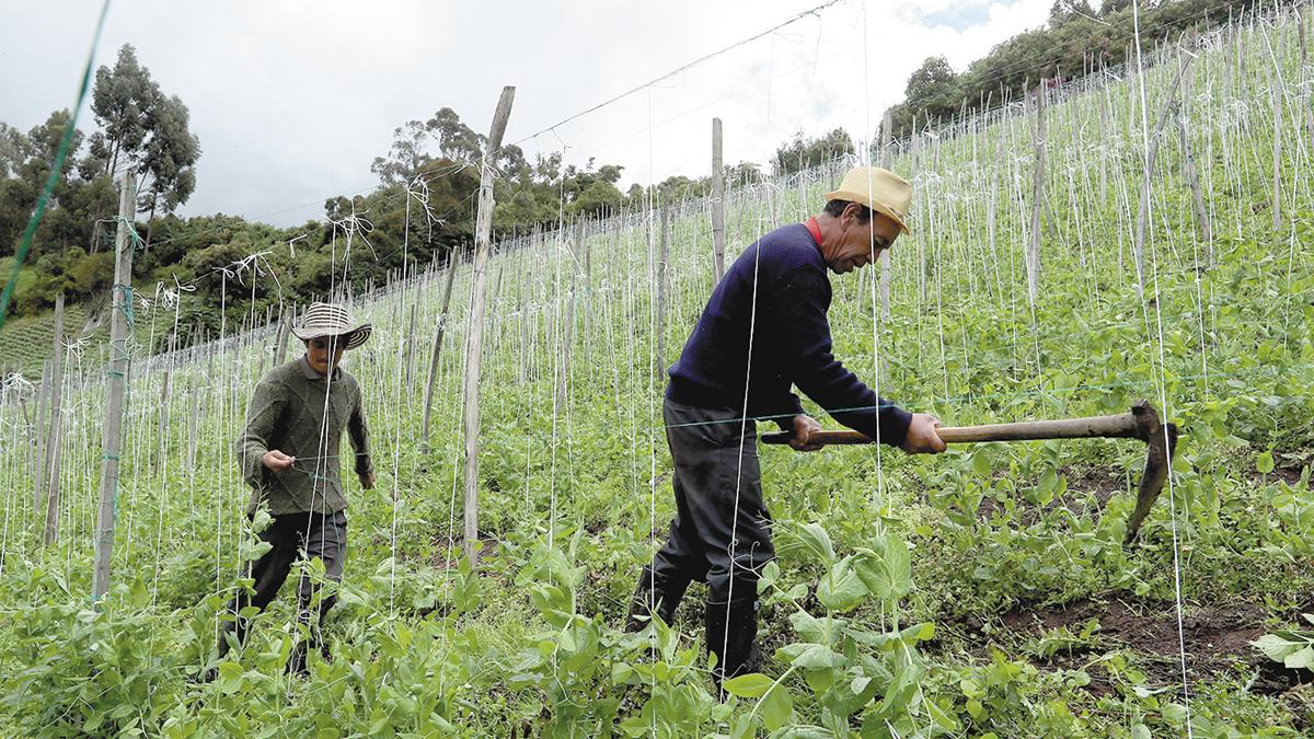 Covid-19, debastador para el empleo rural