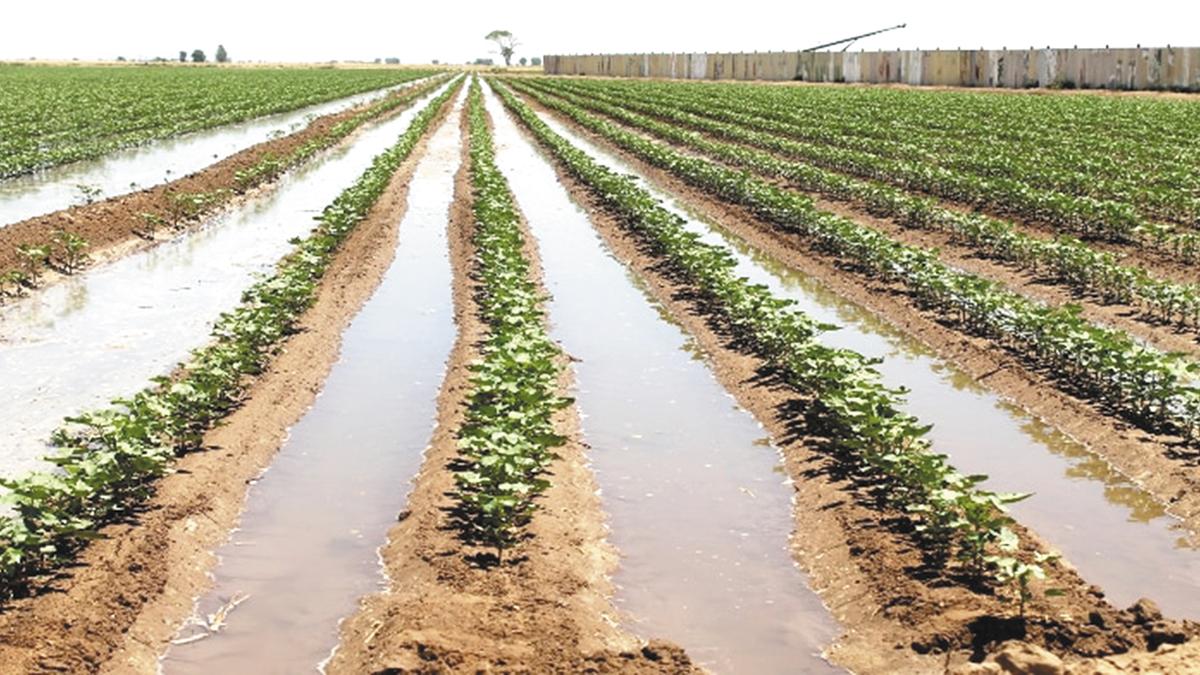 Manejo hidroagrícola, actividad prioritaria para gobierno de México: RSR