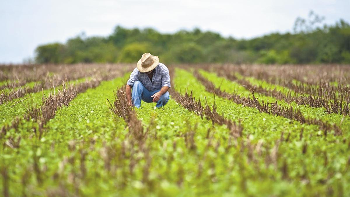Las decisiones gubernamentales están acabando  con el agro mexicano
