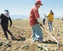 La Semarnat suspende uso del glifosato como herbicida agrícola a partir del 2024