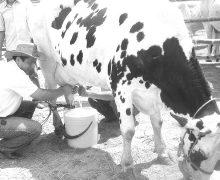 México necesita  aumentar consumo y  producción de leche