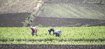 Centroamérica creará plan regional de recuperación para el agro tras pandemia