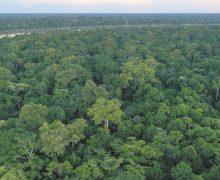 Sinergia de Conagua y Conafor en beneficio de los bosques